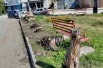 اعتراض شدید مردم و فعالان محیط زیست به قطع بی رویه درختان به بهانه هرس توسط شهرداری مسجدسلیمان + به همراه تصاویری از هرس درختان در مسجدسلیمان و مقایسه با شهرهای همجوار