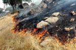 بخشدار آبژدان: با توجه به حجم بالای آتش بالگرد آبپاش جهت مهار نهایی حریق تا ساعاتی دیگر وارد منطقه خواهد شد+تصاویر