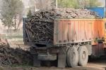 چوب های قاچاق مسجدسلیمان و اندیکا در دزفول کشف و ضبط شد